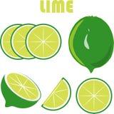 Grön limefrukt, gräsplan rotar, skivor på vit bakgrund, handteckningen, målning Arkivbild