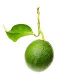 Grön limefrukt med det isolerade bladet Arkivbilder