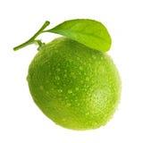Grön limefrukt med vattendroppar royaltyfri foto