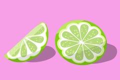 Grön limefrukt på rosa bakgrundsvektorillustration saftig ljus citrusfrukt royaltyfri illustrationer