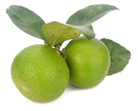 Grön limefrukt som isoleras på vit bakgrund royaltyfri fotografi