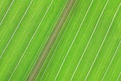 grön linje Royaltyfria Bilder