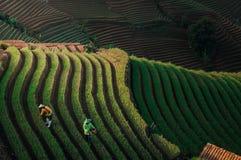 Grön linje terrassera för modellkoloni royaltyfria bilder