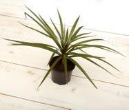 Grön liten växt i tillbaka kruka Royaltyfri Fotografi