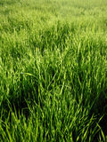 grön livstid Arkivfoton