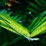grön livstid Royaltyfri Fotografi
