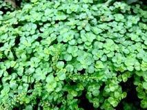 Grön livtextur royaltyfri bild