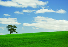 grön lone tree för fält Arkivbilder