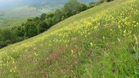 Grön lutning med blommor i sommar arkivfoton