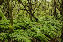 Grön madeira Tropisk skog i bergen på madeiraön royaltyfri bild