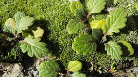Grön makroskönhet Fotografering för Bildbyråer
