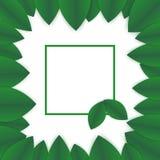 Grön mall för kronbladrambaner Fotografering för Bildbyråer