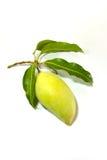 Grön mango på vit bakgrund royaltyfria foton