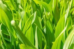 Grön matta av gräs Arkivbilder