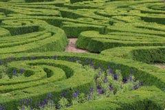 grön maze Arkivfoton