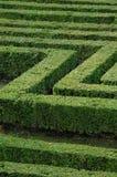 grön maze Arkivbild