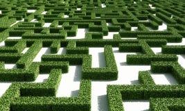 grön maze1 Arkivfoto