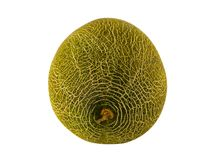 Grön melon längs en vit bakgrundsnärbild med ett modellingrepp Royaltyfria Foton