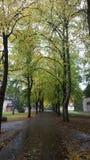 Grön mest forrest gataleeve Arkivfoto