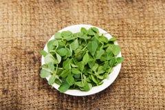 Grön Methi eller för bockhornsklöver indisk krydda Royaltyfria Foton