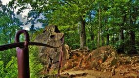 Grön mierci för› för skogzakrÄ™t Å Arkivbild
