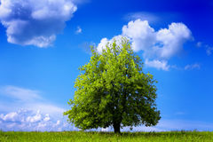 Grön miljö royaltyfri foto