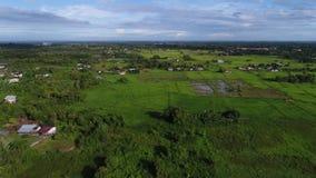 Grön miljö på Sabah Malaysia lager videofilmer