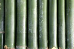 grön modell för bambu royaltyfri bild