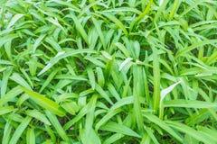 Grön morgonhärlighet Royaltyfri Fotografi