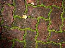 grön moss Fotografering för Bildbyråer