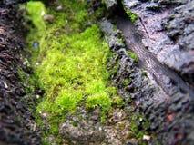 grön moss Arkivfoton