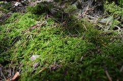 grön moss Royaltyfria Bilder