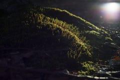 grön moss Arkivbilder