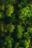 grön moss för bakgrund arkivbild