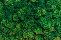 grön moss för bakgrund fotografering för bildbyråer