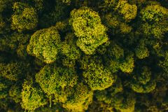 grön moss för bakgrund arkivbilder