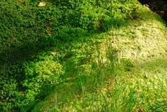 grön moss för detaljer Arkivbilder