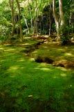 grön moss för skog arkivfoto