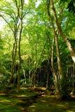 grön moss för skog royaltyfri bild