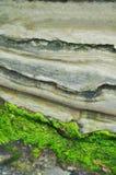 Grön Moss San Diego La Jolla Rocky kust Arkivfoto