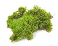 Grön Moss som isoleras på vit bakgrund royaltyfri foto
