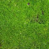 Grön mossa Fotografering för Bildbyråer