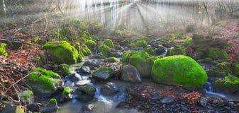 Grön mossa i liten vik Royaltyfri Bild