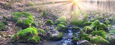 Grön mossa i liten vik Arkivbilder