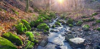 Grön mossa i liten vik Arkivfoto