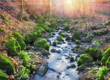 Grön mossa i liten vik Royaltyfria Bilder