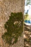 Grön mossa i stammen arkivbilder