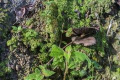 Grön mossa med den lösa champinjonen Arkivfoto