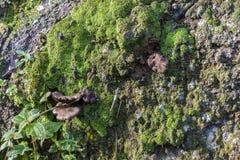 Grön mossa med den lösa champinjonen Royaltyfri Fotografi