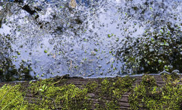 Grön mossa- och dammvattenreflexion Arkivbild